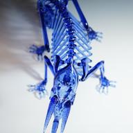 Jackson's chameleon skeleton (CFL)