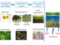 Conceptual framework3.png