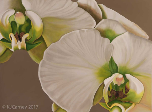 Orchid by Kay Carney