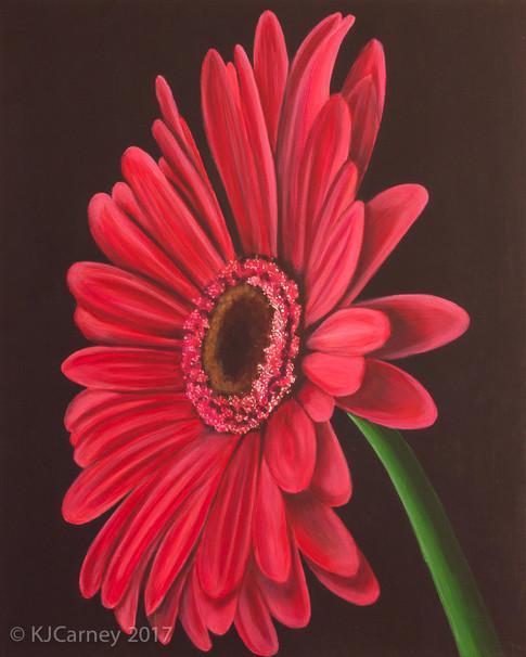 Gerbera by Kay Carney