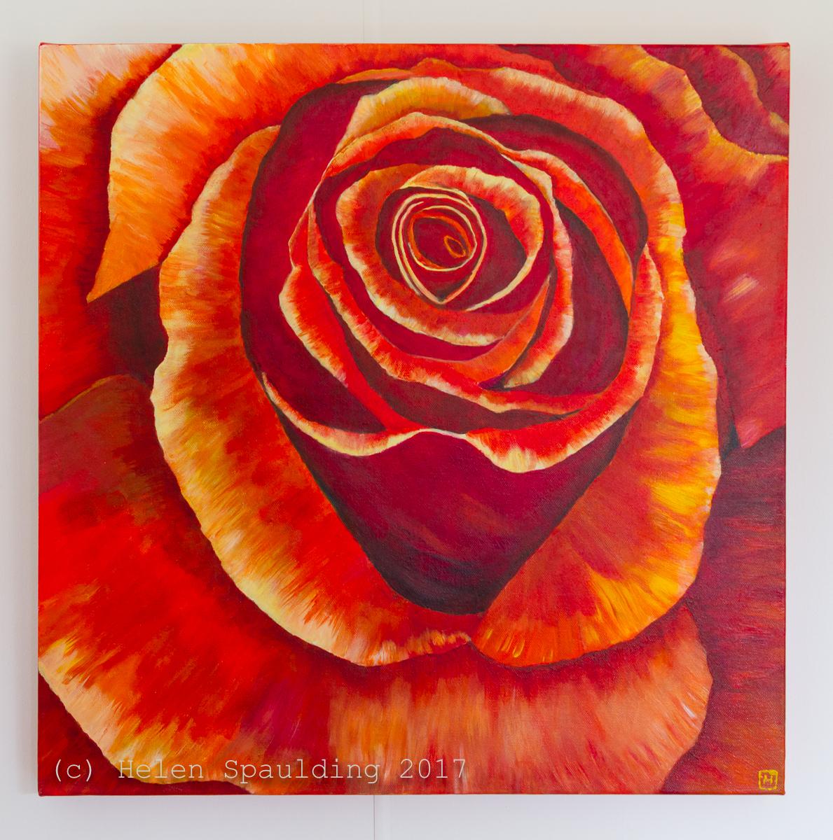 Orange Rose by Helen Spaulding