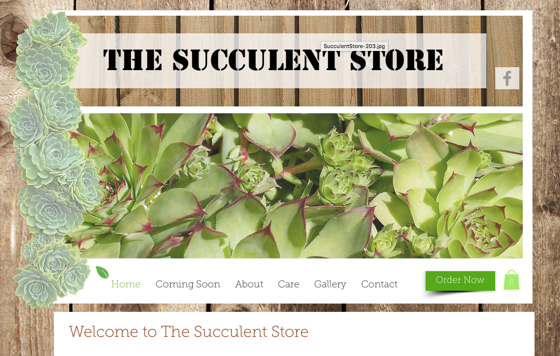 The Succulent Store