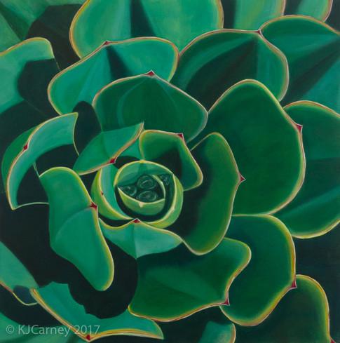 Echeveria by Kay Carney
