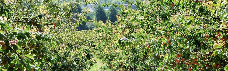Godshill Orchard Dorset Farmers Market