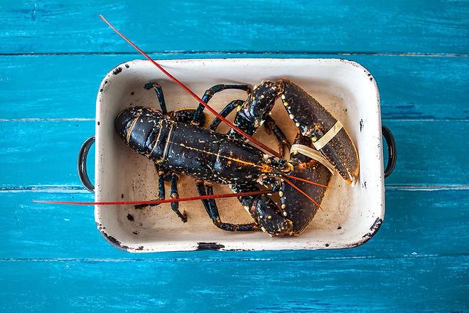 Dorset-Shellfish-black-lobster-in-a-tray