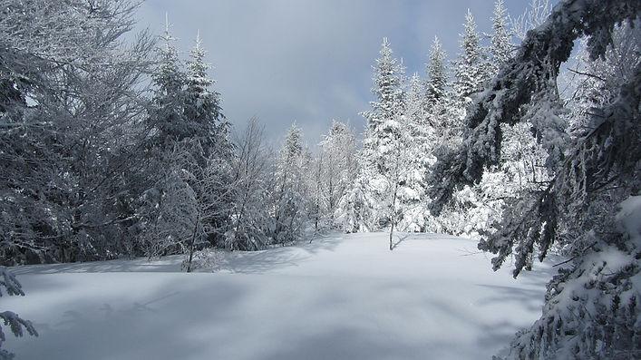 snow-317265_960_720.jpg