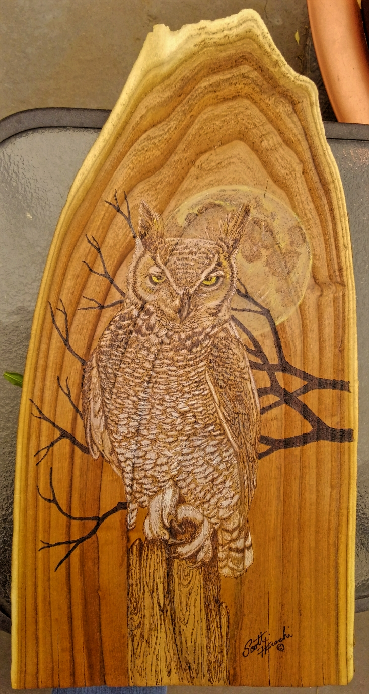 Owl on Russian Olive