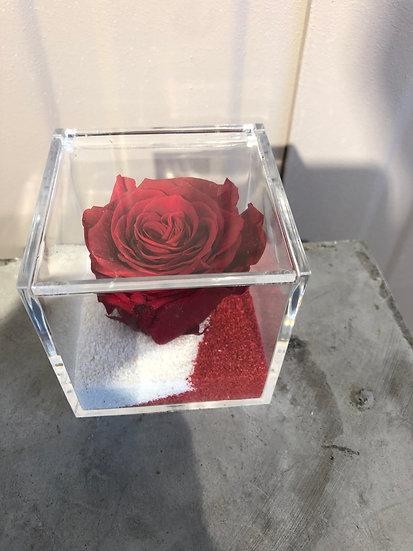 Cube plexi avec rose éternelle