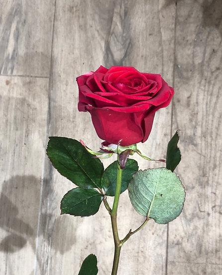 Rose rouge 50 cm