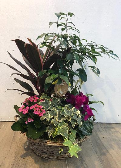Composition plantes fleuries