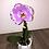 Thumbnail: Orchidée singolo dans cache pot