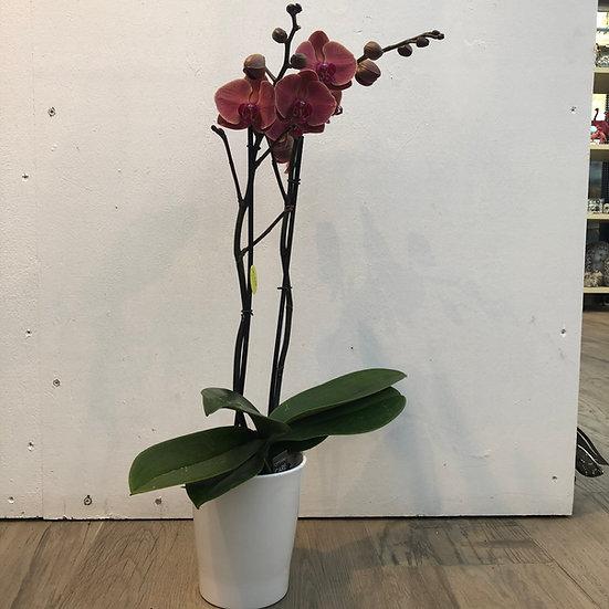 Orchidée + cache pot