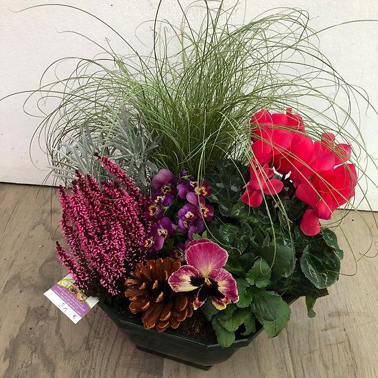 Composition d'automne avec Carex