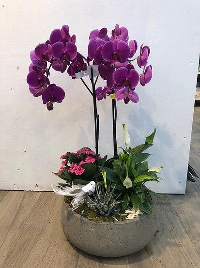Composition avec Orchidée