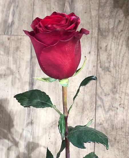 Rose rouge 70 cm