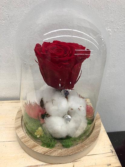 Cloche rose et coton