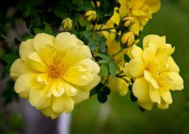 Flower 2020 10.jpg