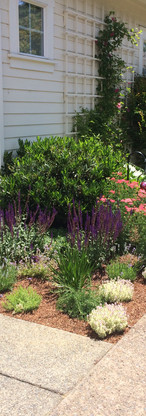 Jacksonville Cottage Garden