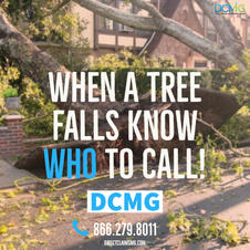 DCMG - Tree Removal (square) 2.jpg