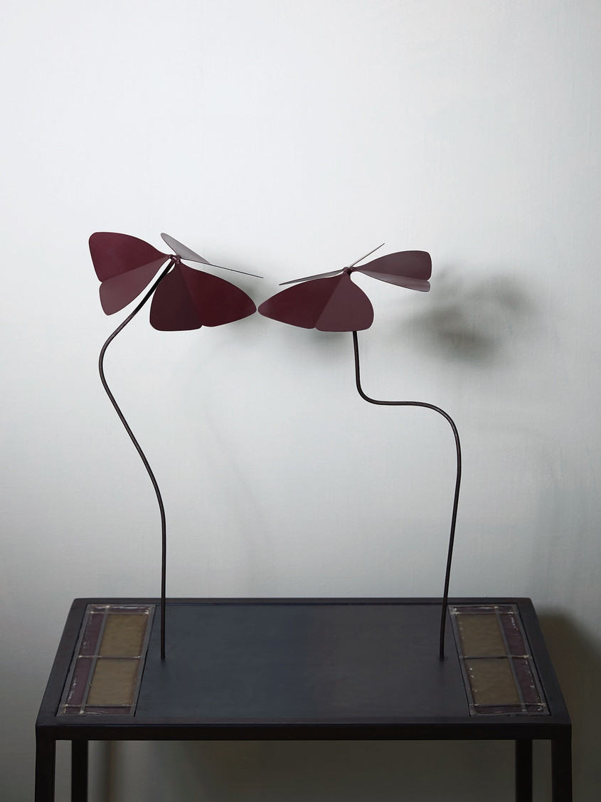 """2014 - Oxalis deppei """"coming together"""" - coloured steel - 65 x 50 x 26 cm"""