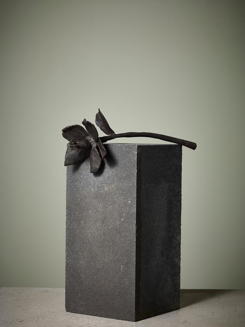 2013 - helleborus niger - bronze -
