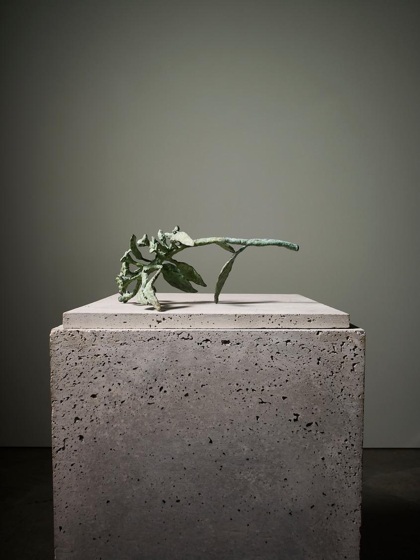 2013 - Euphorbia - bronze