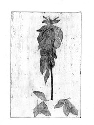 #12 Fallen leaf_bewerkt.jpg