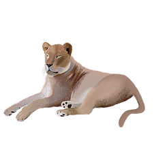 lioness.png