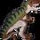 Thumbnail: DN5 T-Rex