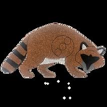 RC-2   Raccoon
