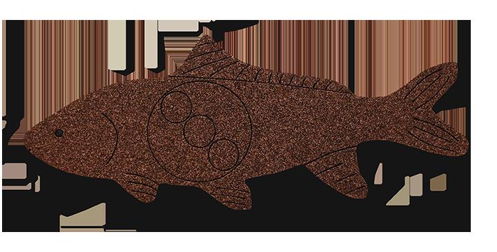 FSH1 Fish