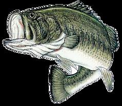 Kankakee River bass tournaments