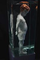 sculpture in equarium