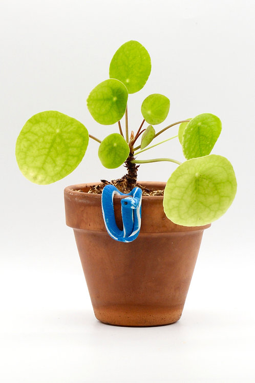 Snake - Plant Pals