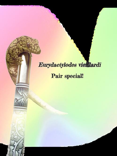Eurydactylodes vieillardi (Pair) - EVP