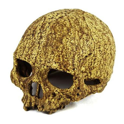 Pangea Human Skull Cave