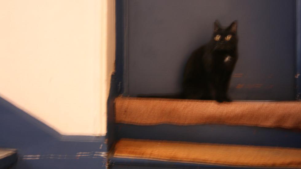 10 / chat noir