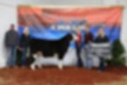 champ steer.jpg