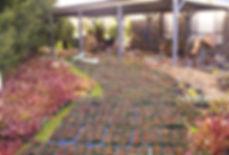 Somerville plants outside 2.JPG