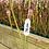 Thumbnail: Sarracenia leucophylla TALL