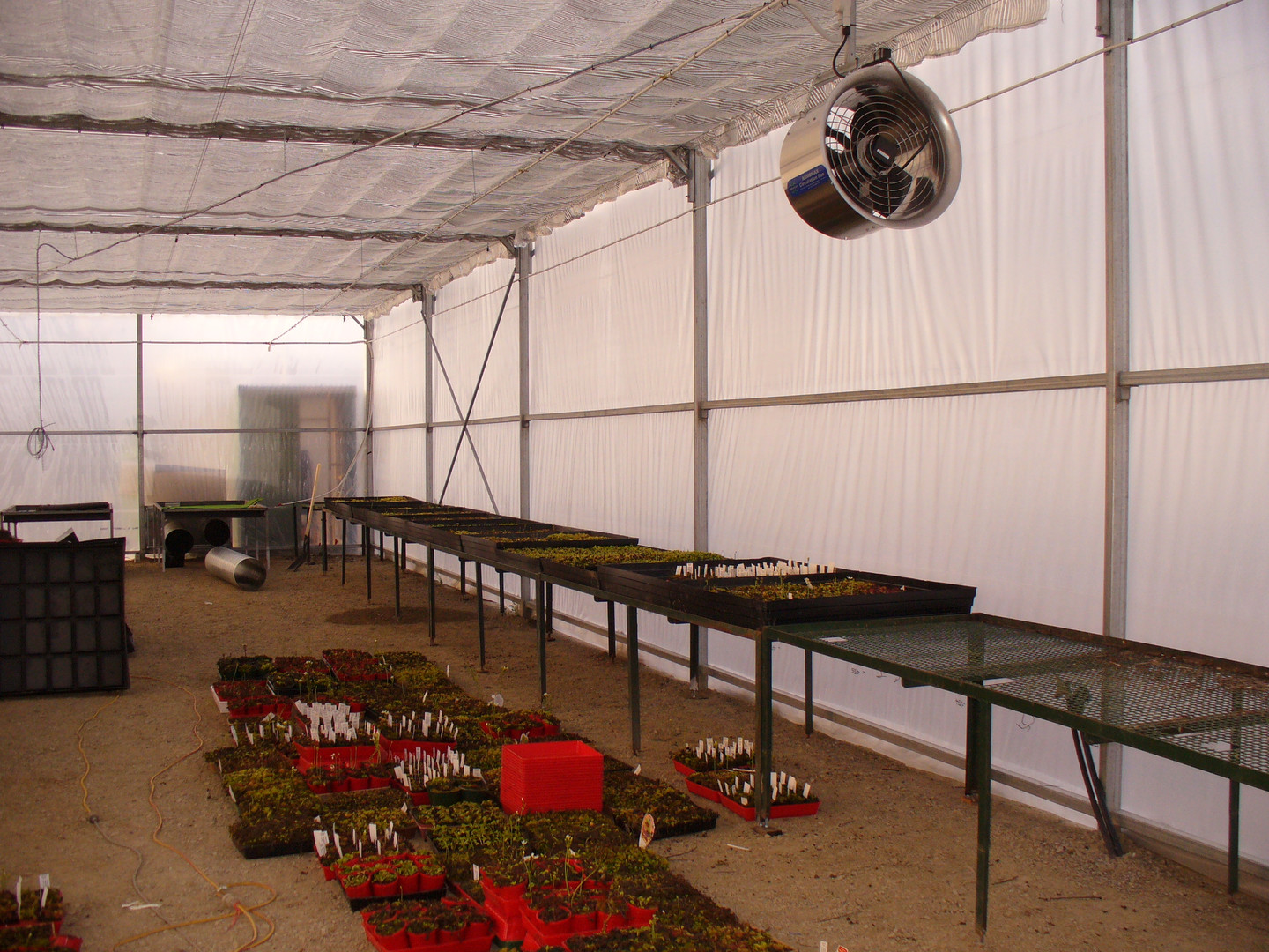 The first lot of benches and plants are brought into the venus fly trap growing room.  The screens, foggers and fans are in.