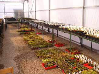 More venus fly traps go into their growing room, with the Collectors named fly traps on the right hand side.