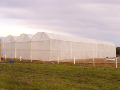 The poly roof is on and finished.  The nursery is now ready to catch rain water and fill the water tanks.