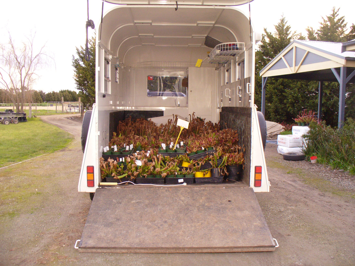 Every day on our way home from the nursery at Keysborough, Jason and Donna brought home a horse float load of plants each.