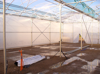 Standing in the visitors room, looking through the centre wall to the packing/potting room.
