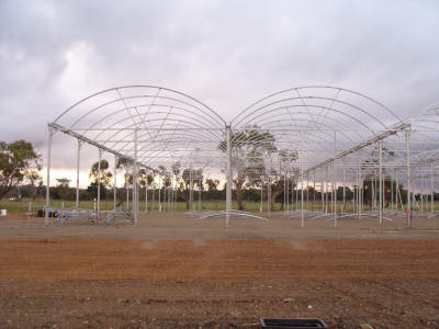 The left hand room will be for cold growing droseras, utricularias and dionaeas.  The room on the right has a front door access for visitors.  There are 5 spans in total.