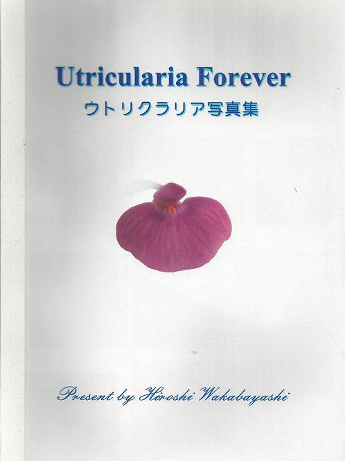 Utricularia Forever - Wakabayashi