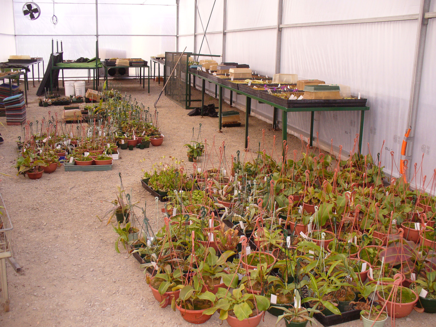 The propagation house.  All the Nepenthes were put in this house to start with because the gas heater was turned on first, until the Nepenthes house is ready.
