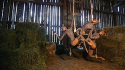 Cats Play at Carol's Barn