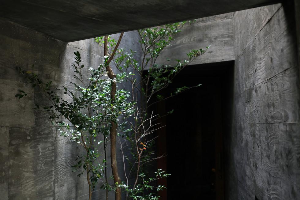 18 光洞の家